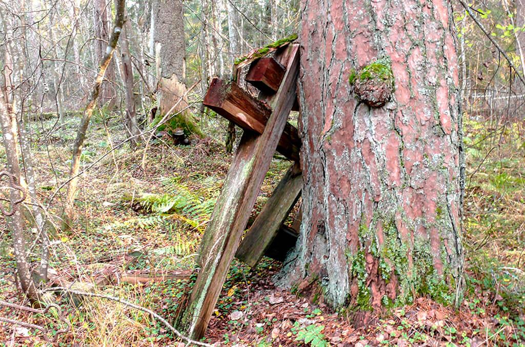 кладбище в лесу